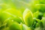 Closeup nature view of green...